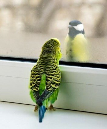 Прикольные фотки с попугаями | Попугаи ...: caudicombe.xpg.uol.com.br/prikolinye-fotki-s-popugajami.html