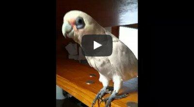 Прикольные коты и попугаи видео