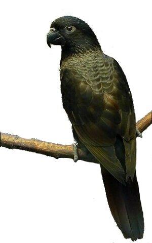 Купить попугая лори в москве - a3